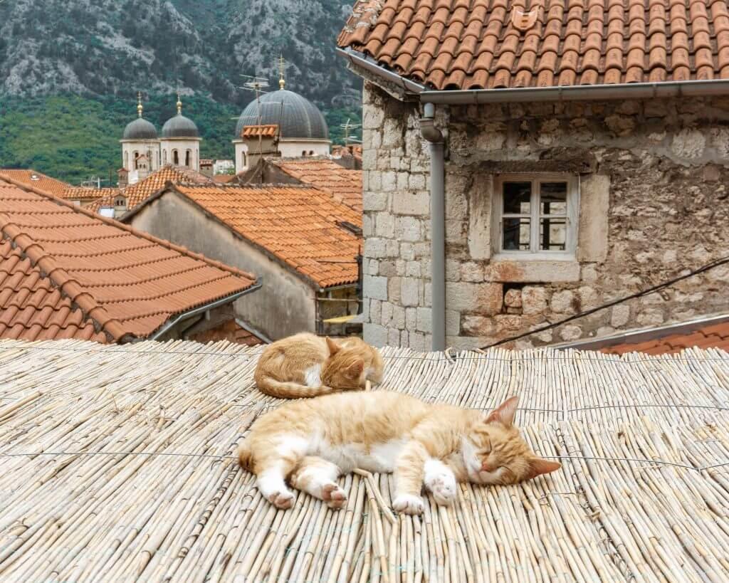 bay-of-kotor-montenegro-red-white-adventures