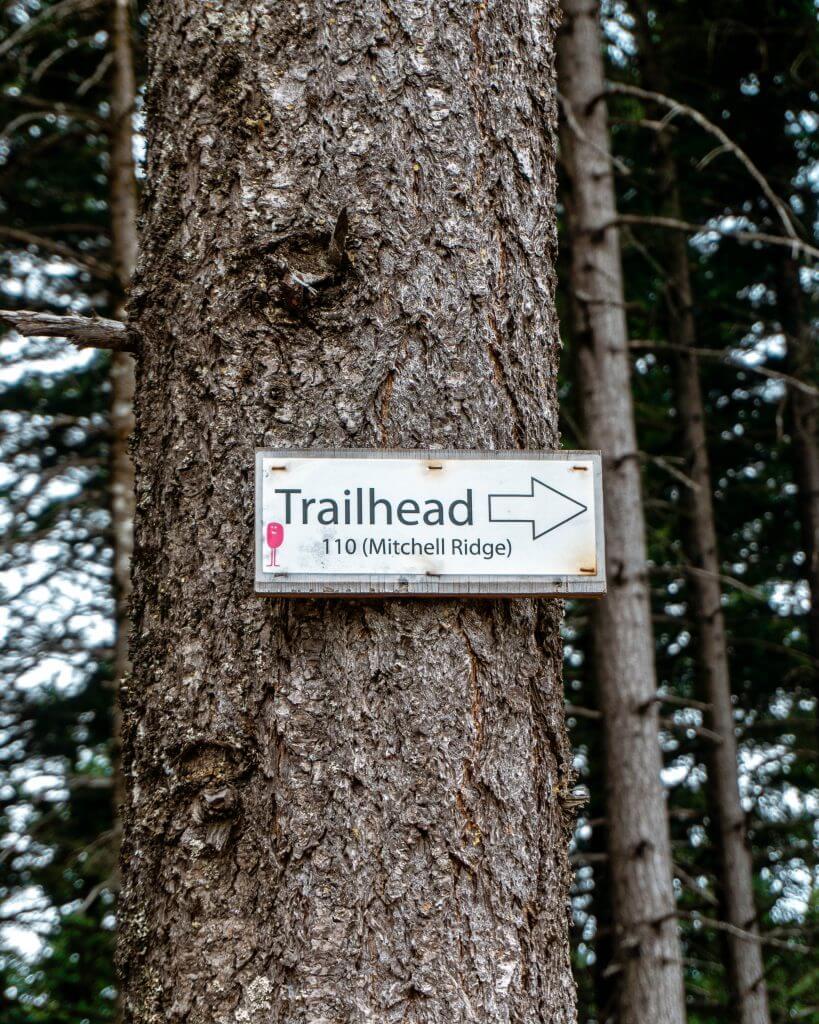 Tree in Mount Hood National Park.