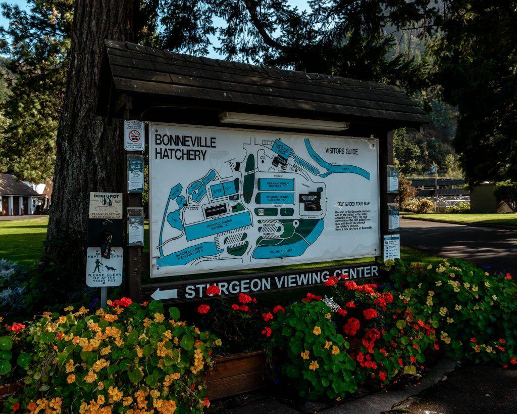 Bonneville Hatchery near Portland, Oregon.