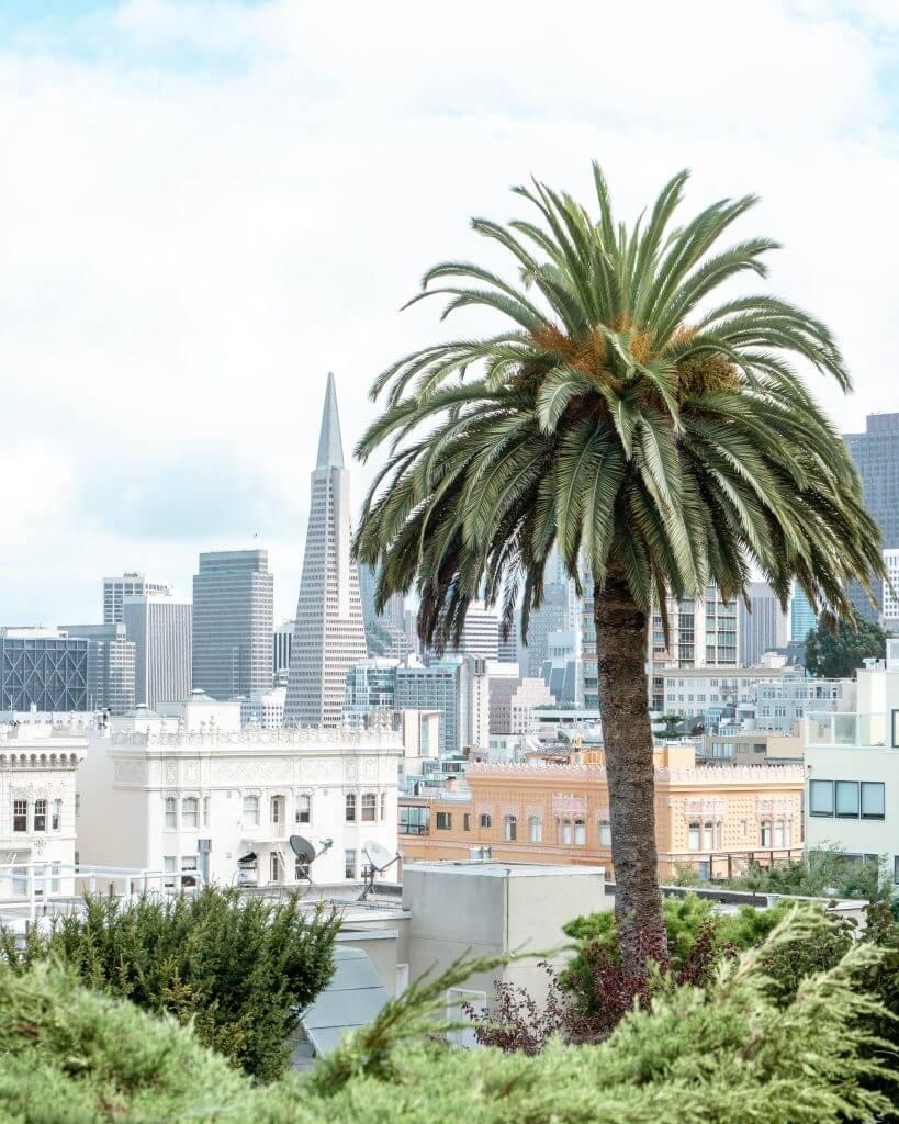 Palm tree in San Fran.