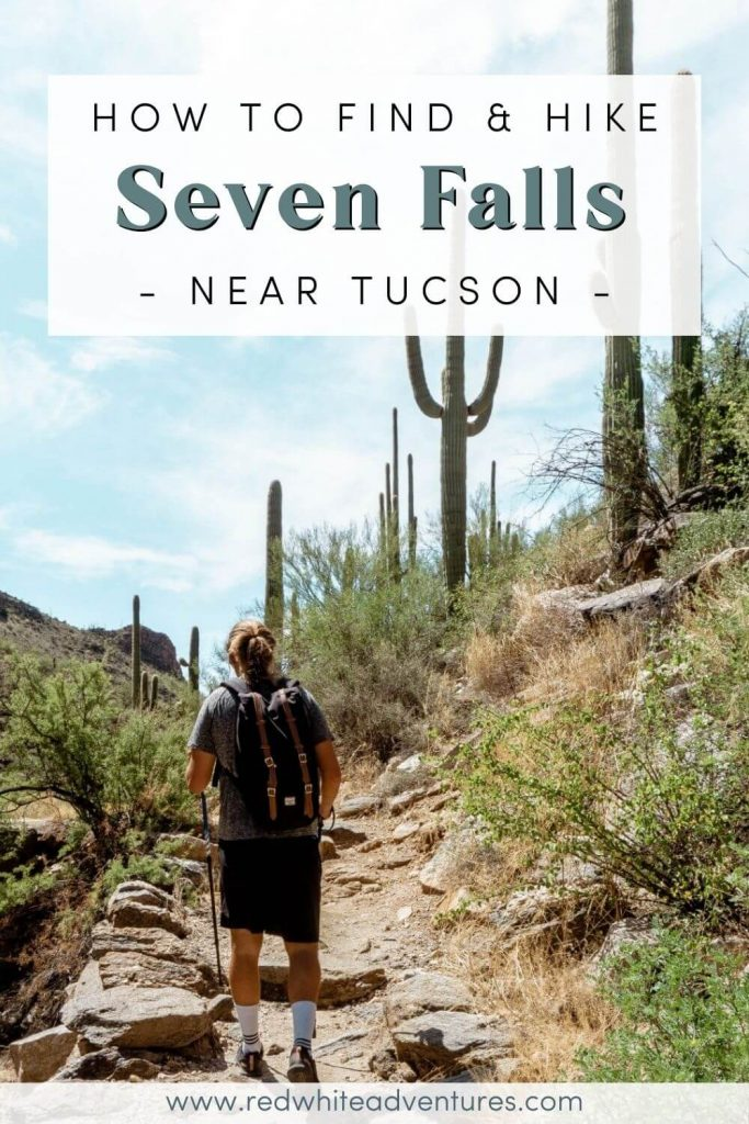 Dom walking next to Saguaro cacti in Tucson Arizona