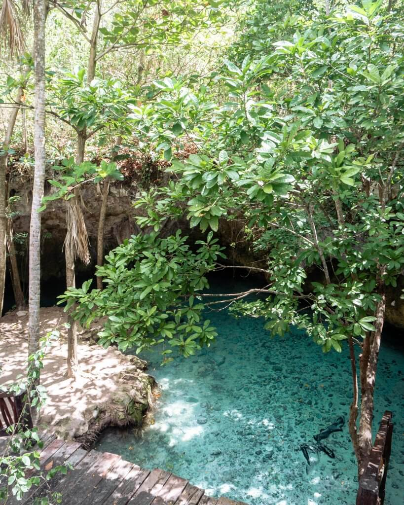 Beautiful trees and water in Mexico.