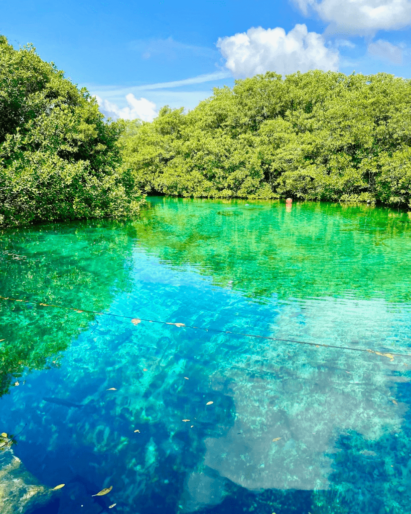 Casa cenote has some of the most beautiful water in Mexico!