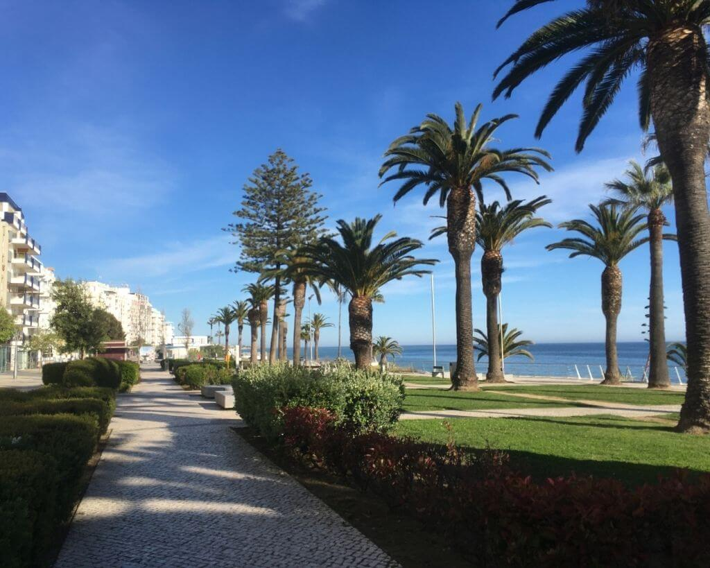 Palm trees along the water in Armacao de Pera in Portugal