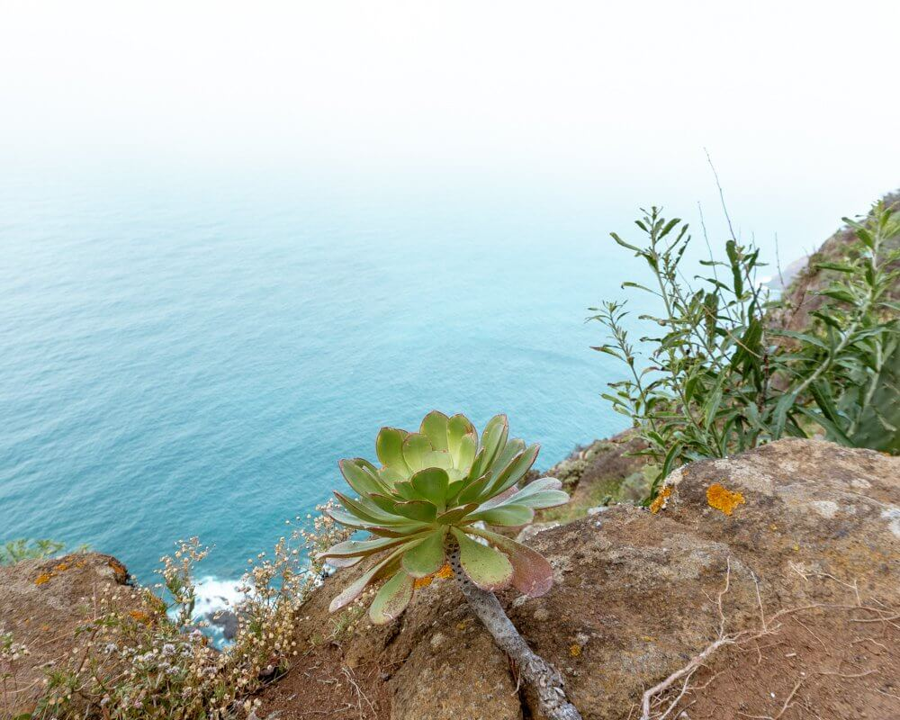 Beautiful coastline while hiking in the Anaga National Forest.